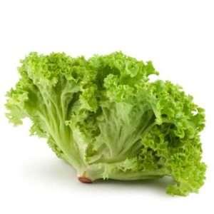 organic lettuce green
