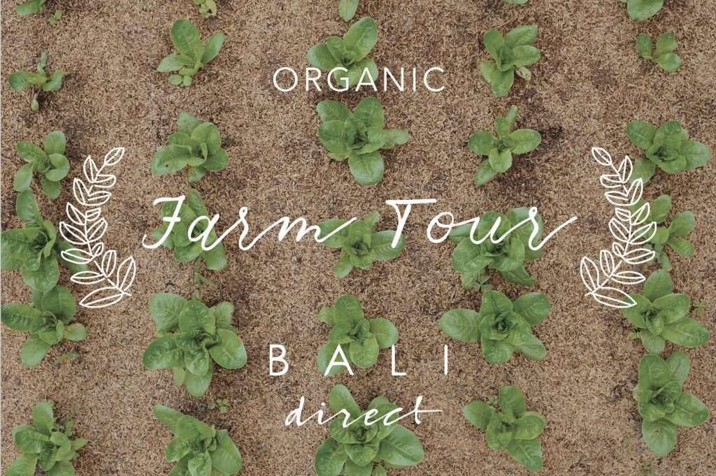 Bali Direct Farm Tour Organic Local Produce Bukit Mesari