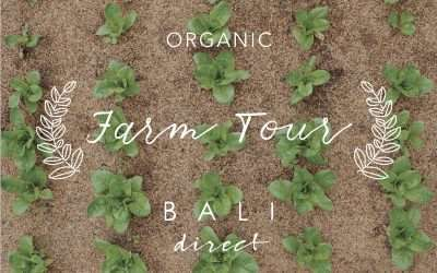 Bali Direct Farm Tour