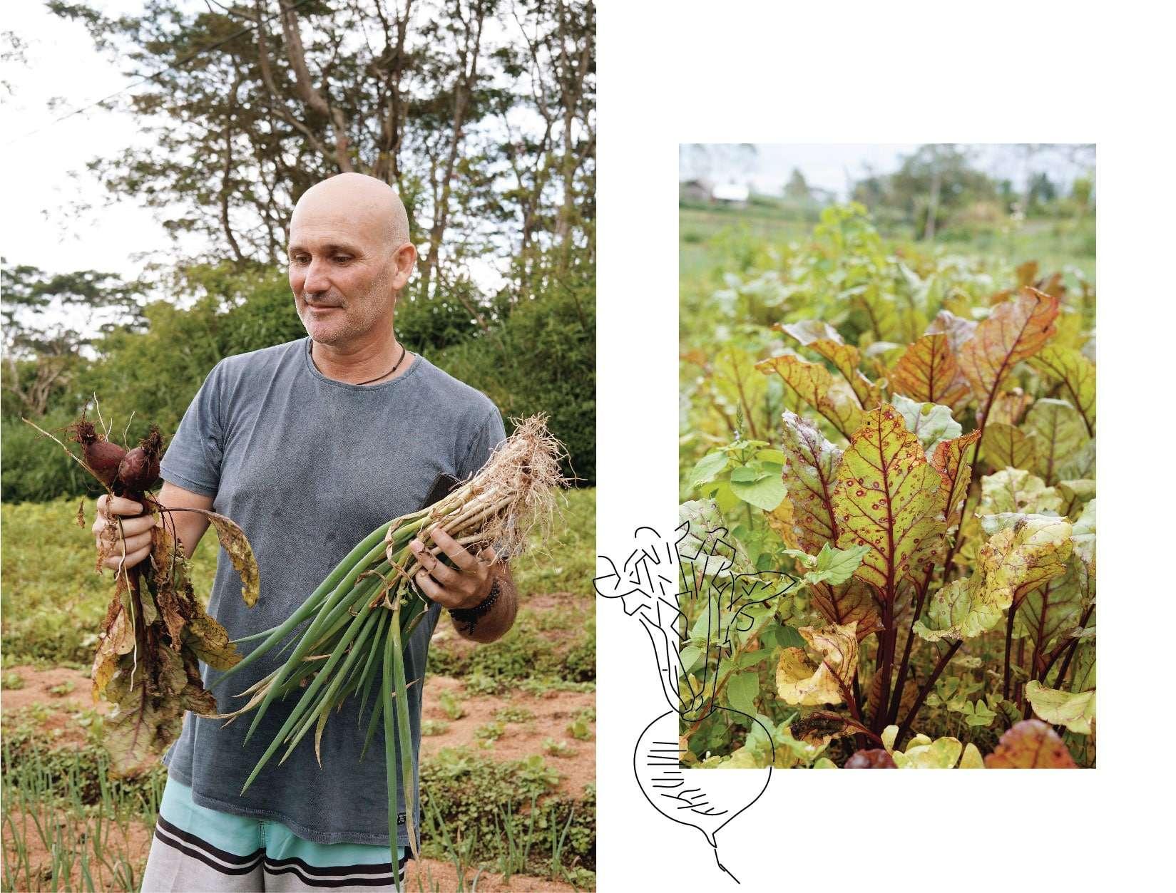 Bali Direct Organic Farm Tour Bukit Mesari Local Produce Beets Green Onion Chef