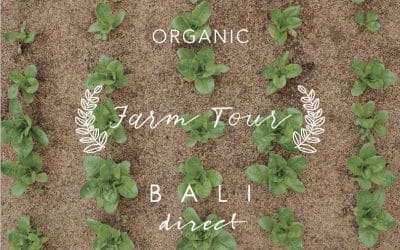 Bali Direct Organic Farm Tour