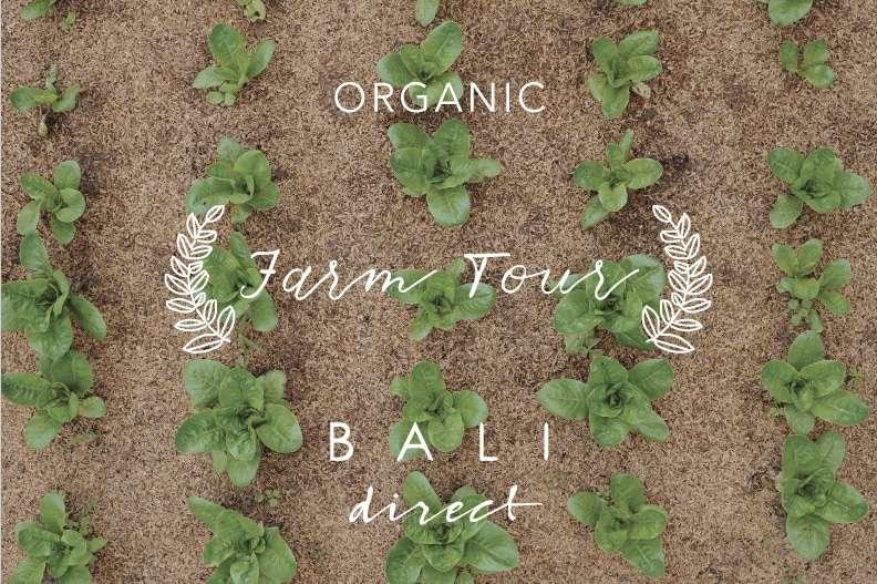 Bali Direct Organic Farm Tour